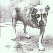 ALICE IN CHAINS - ALICEINCHAINS